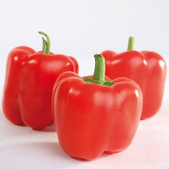BIO Gemüsepflanzen Paprika Midred, im ca. 12 cm-Topf | #3