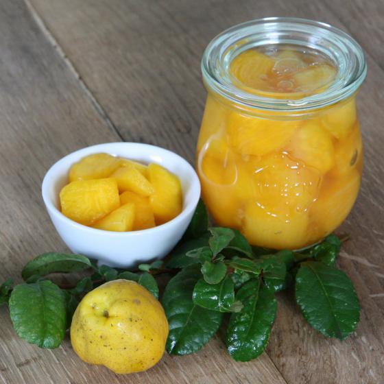 BIO Zitruspflanze Nordische Zitrone, im ca. 12 cm-Topf | #3