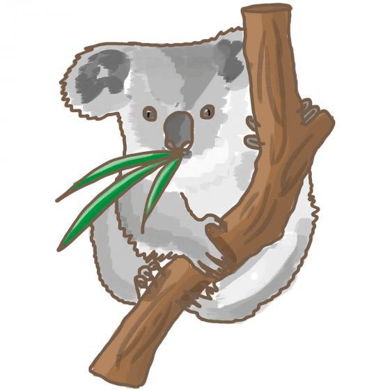 BIO Kräuterpflanze Eukalyptus, im ca. 12 cm-Topf | #3