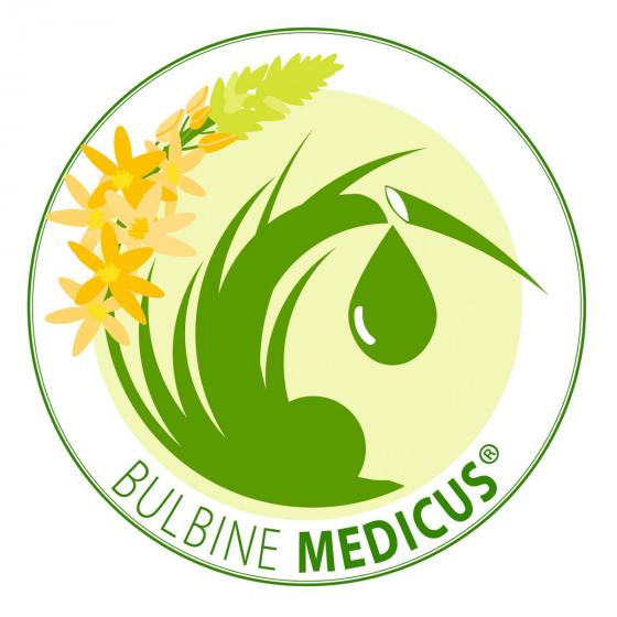 Katzenschwanzpflanze Medicus, im ca. 12 cm-Topf | #3