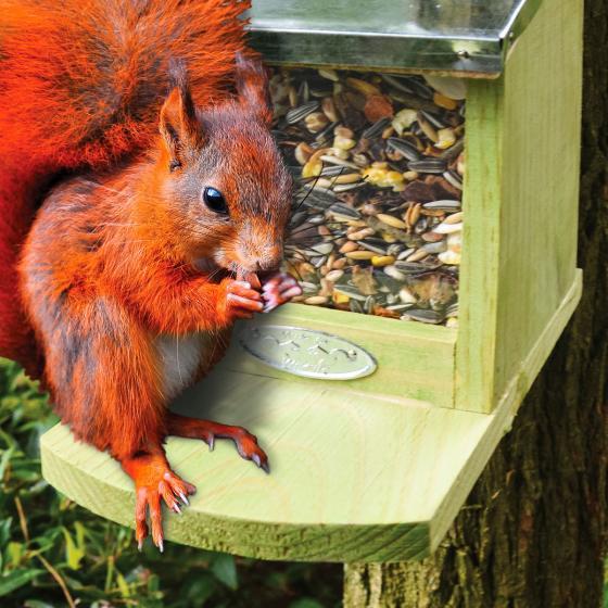 Eichhörnchenfutter, 750 g | #3