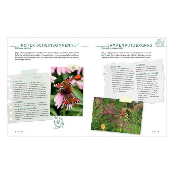 Die schönsten Pflanzen, die wenig Wasser brauchen für Garten, Balkon und Terrasse | #3