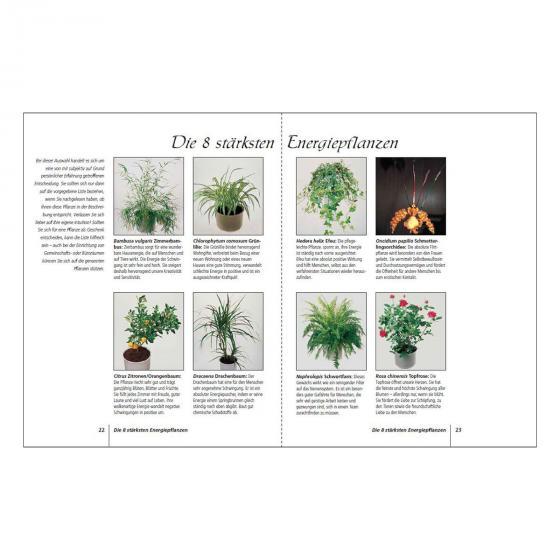 Positive Energie mit Zimmerpflanzen | #3