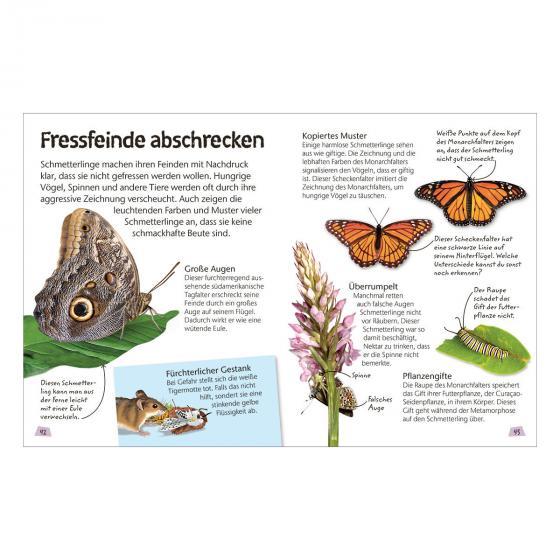 Naturführer für Kinder - Schmetterlinge | #3