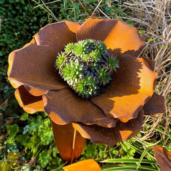 Beetstecker Blumenblüte, Edelrost | #3