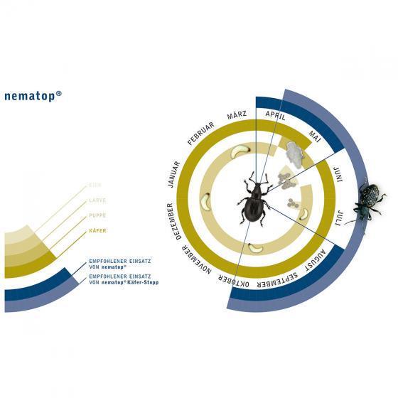 e-nema nematop Käfer-Stopp Nematoden gegen Dickmaulrüssler, 2,5 Mio. | #3