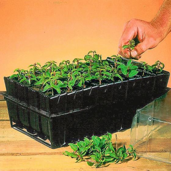 Roottrainers, Doppelpack | #3