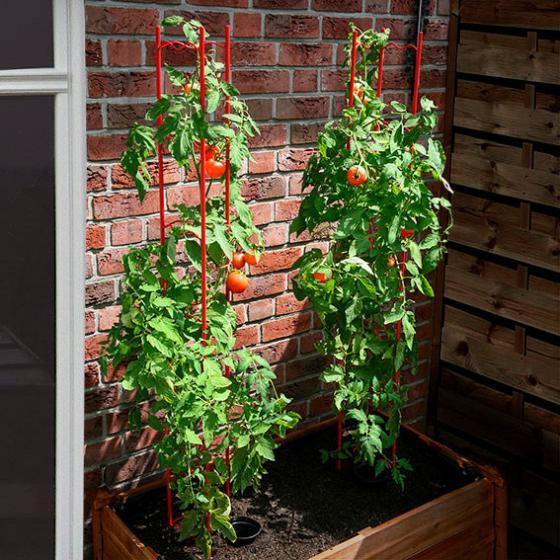 Tomaten-Rankgitter XXL, 3-teilig, Höhe 236 cm | #3