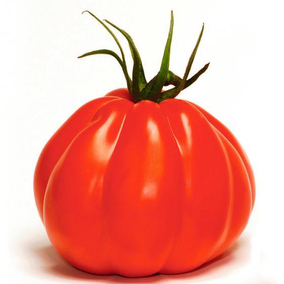Tomatenpflanze Corazon, veredelt, im ca. 12 cm-Topf | #3