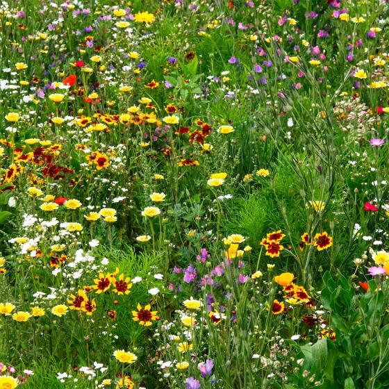 Blumen-Saat-Teppich 0,20 x 3 m, Bunte Bienenweide | #3