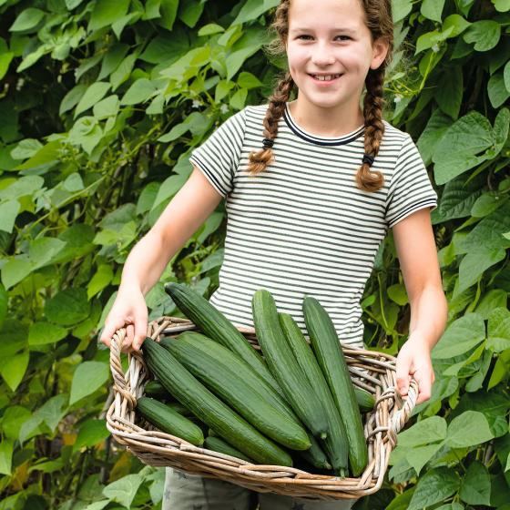 Gurkenpflanze Loustik F1, veredelt | #4