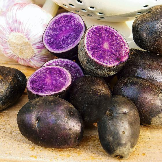 Kartoffel Blue Congo, 5 Stück | #4