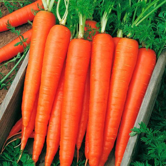 Gemüsesamen-Sortiment Gartenmöhren | #4