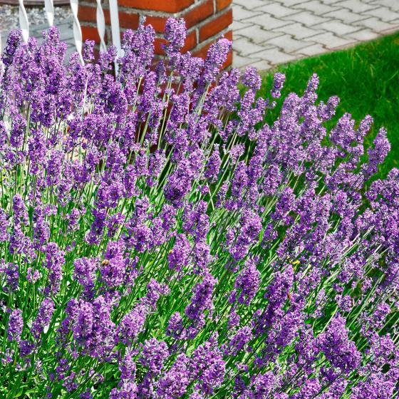 Sortiment Blauer Garten | #4