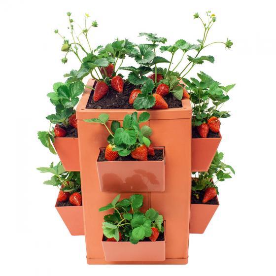 Gemüse- und Pflanzenturm | #4