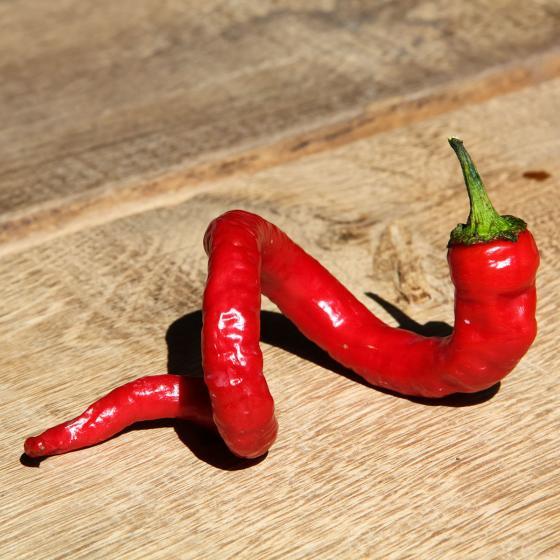 Blu Bio-Gemüsepflanze Chili Milder Spiral | #4