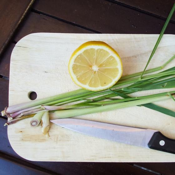 Kräuterpflanze Zitronengras Tasty Lemon, im ca. 12 cm-Topf | #4