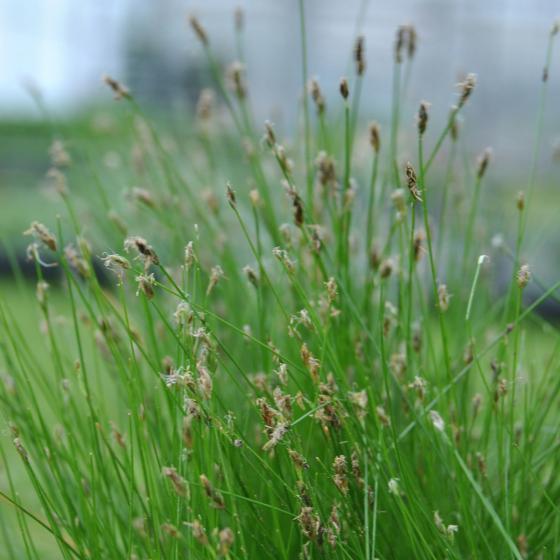 Mini-Teichholzkiste, 45x32x21 cm mit 4 Wasserpflanzen | #4