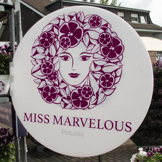 Petunie Miss Marvelous   #4