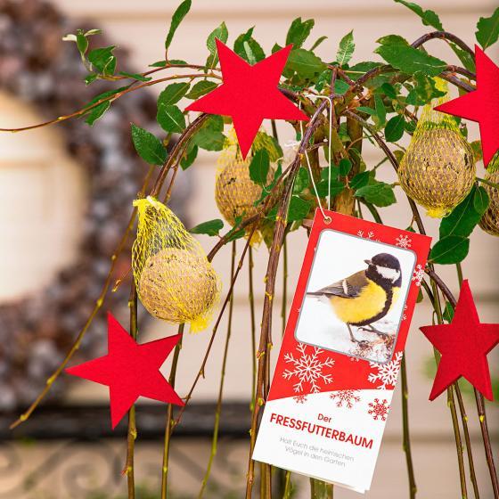 Vogelfutterbaum, im ca. 23 cm-Topf | #4