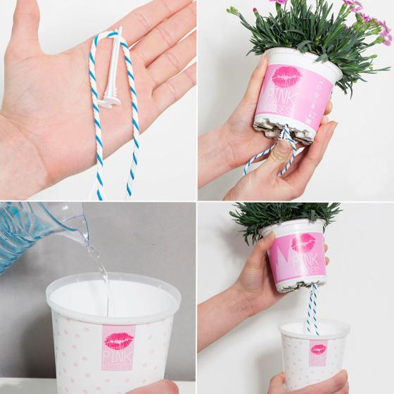 "Topfnelke ""Pink Kisses"" im Deko-Wasserspeichertopf | #4"