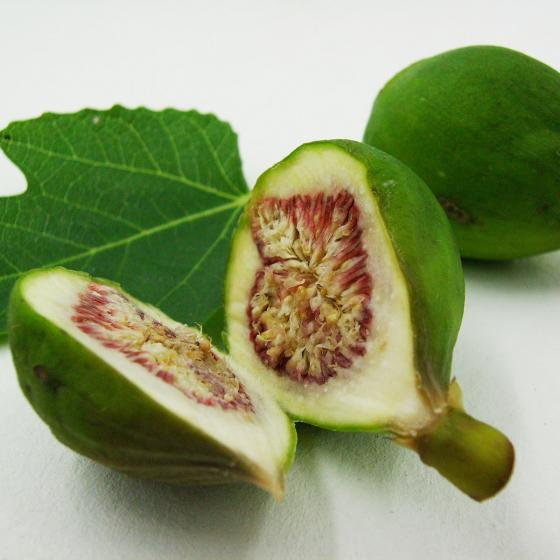 BIO Obstpflanze Feige, im ca. 12 cm-Topf   #4
