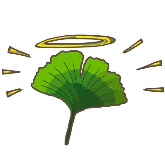 BIO Kräuterpflanze Uralter Ginkgo, im ca. 12 cm-Topf | #4