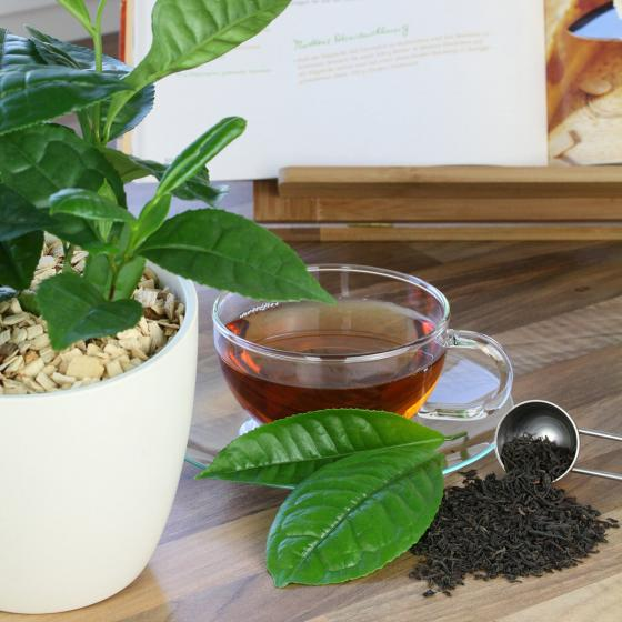 Blu Bio Echte Tee-Pflanze | #4