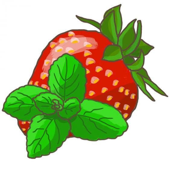Blu Bio-Kräuterpflanze Erdbeerminze | #4