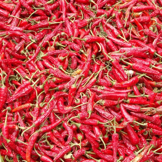 Blu Bio-Gemüsepflanze Chili Naschzipfel | #4
