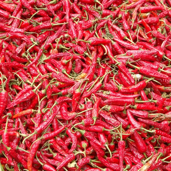 BIO Gemüsepflanze Chili Naschzipfel, im ca. 12 cm-Topf | #4