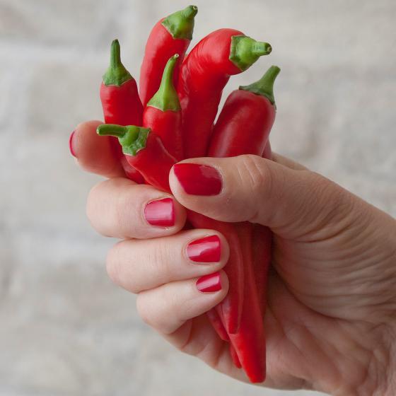 BIO Gemüsepflanze Zwerg-Chili, im ca. 12 cm-Topf | #4