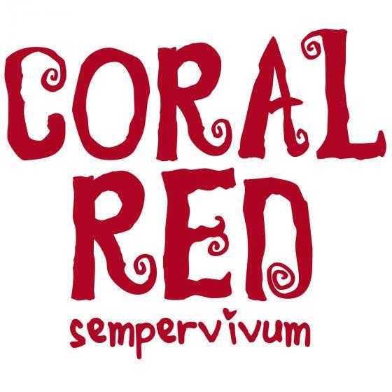 Korallenroter Hauswurz | #4
