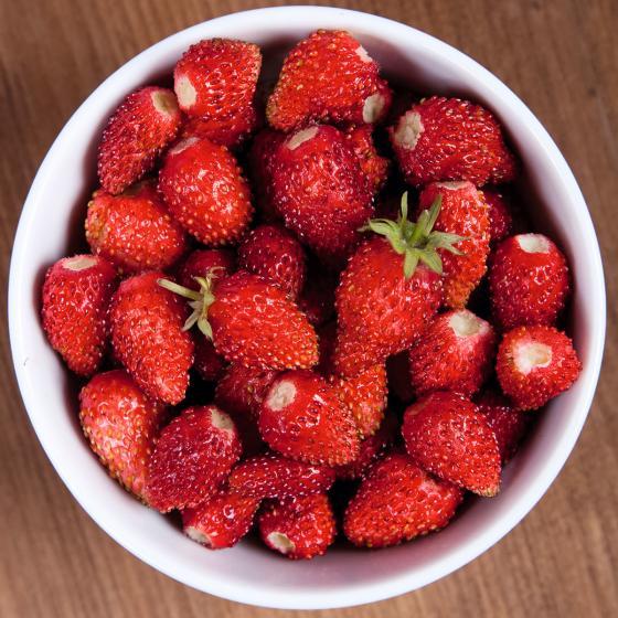 Monatserdbeerensamen Rügen | #4