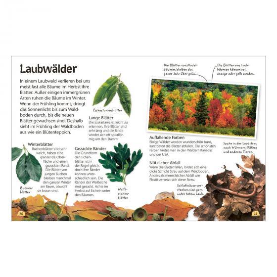 Naturführer für Kinder - Wald | #4