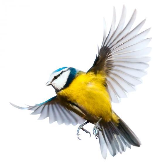 Ganzjahres-Meisenknödel für Wildvögel, ohne Netz, 6 Stück | #4