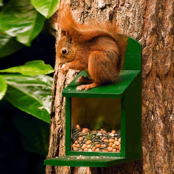 Eichhörnchenfutter, 750 g | #4