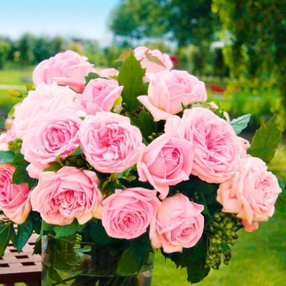 Sortiment Exquisite Edelrosen, im ca. 17 cm-Einpflanz-Topf | #4