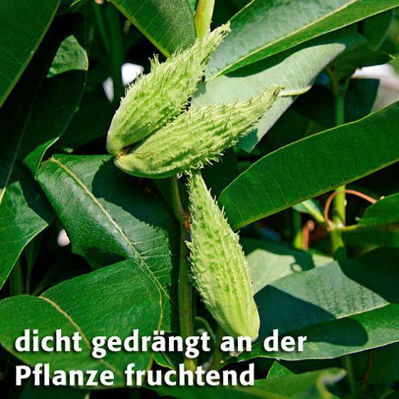 Papageien-Blume | #4