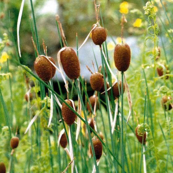 Miniteich Bunte Schale mit Wasserpflanzen | #4