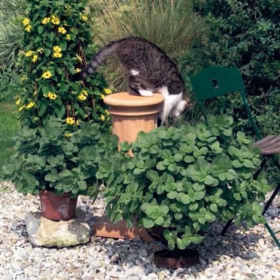 Bunte 'Verpiss-Dich' Pflanze | #4