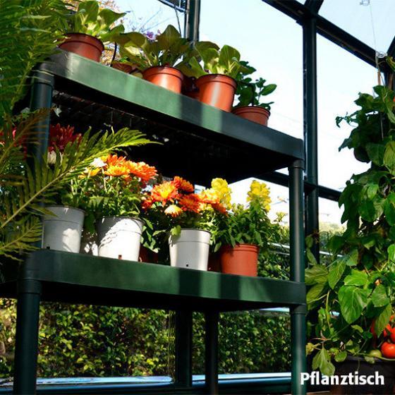 RION Gewächshaus-Komplett-Set Prestige PL46 | #5