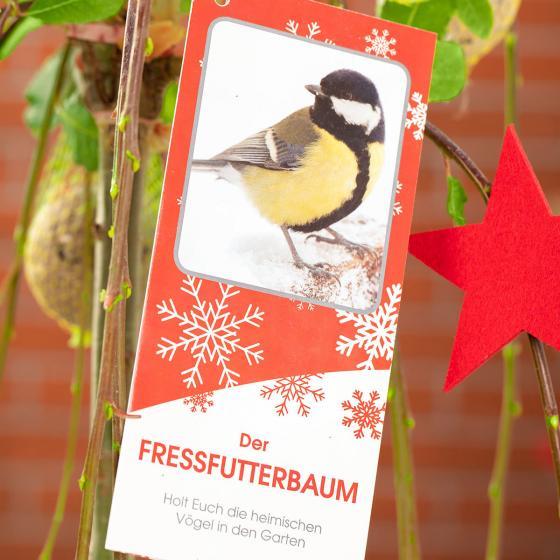 Vogelfutterbaum, im ca. 23 cm-Topf | #5