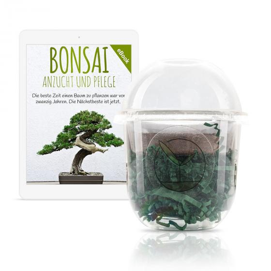 Bonsai Starter Kit Tamarinde Grow2Go | #5