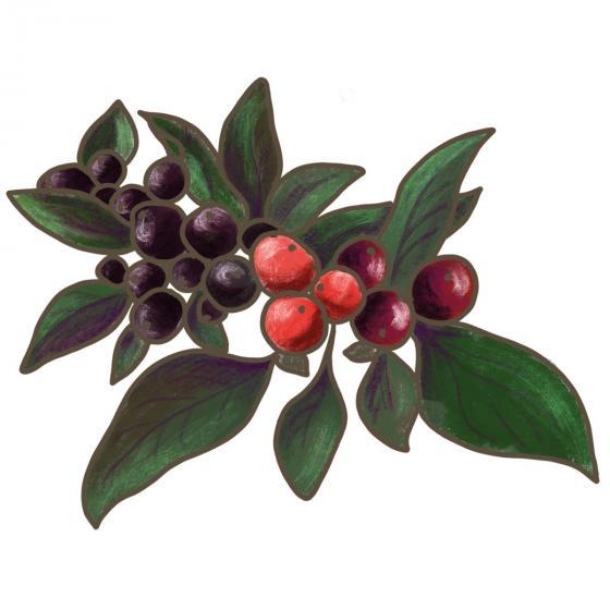 BIO Gemüsepflanze Kleine Perlen Chili, im ca. 12 cm-Topf | #5