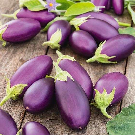 Mini-Auberginenpflanze Diamond Purple, veredelt, im ca. 13 cm-Topf   #5