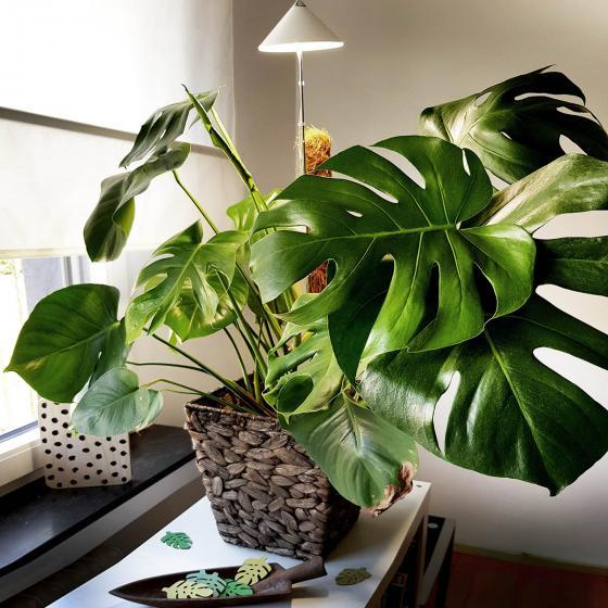 Sunlite Pflanzenlampe, 7 W, 28-100 cm, Ø 11, Kabel 4 m,Aluminium, weiß | #5