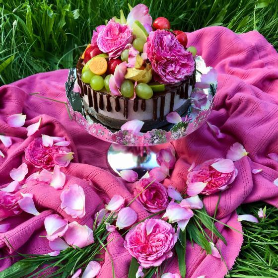 Essbare Culinaric Rose, rosa-apricot, im ca. 22 cm-Topf | #5