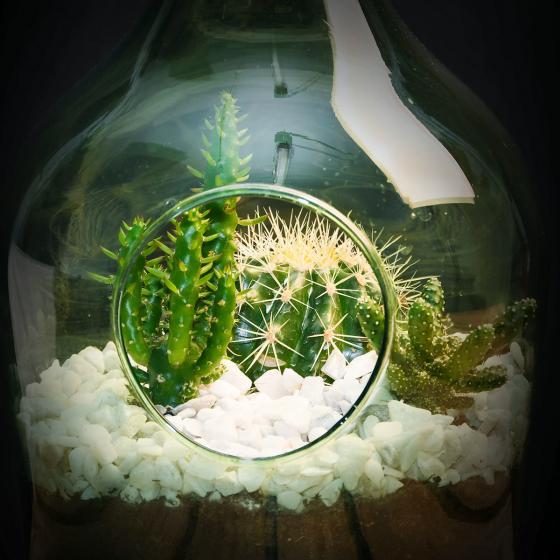 DIY Terrariumflasche mit Seitenöffnung, Komplettset, 3 Liter | #5