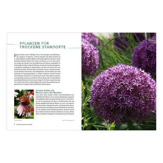 Die schönsten Pflanzen, die wenig Wasser brauchen für Garten, Balkon und Terrasse | #5